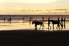 Seaside stroll (I.M.W.) Tags: ocean sunset sea sky horse orange cloud sun reflection beach silhouette coast indianocean shore bangladesh coxsbazar