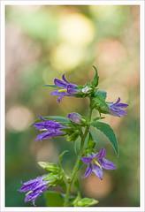 Fiore 201 (Outlaw Pete 65) Tags: macro closeup fiore flower natura nature colori colours nikond600 sigma105mm brescia lombardia italia