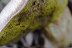 unnamed (sotnik_on) Tags: mushrooms mushroom macro mycology ecology ascomycota