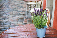 A beautiful rainy day (neus_oliver) Tags: lavender rain wet drops table chairs cafe outdoors bremen street streetphotography germany