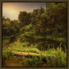 Forest pond. (odinvadim) Tags: mytravelgram iphoneart forest sunset iphone iphoneography iphoneonly evening painterlymobileart river pond snapseed textures travel artist landscape textured painterly