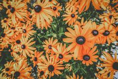 Slider Sunday (melbaczuk) Tags: week312016 52weeksthe2016edition weekstartingfridayjuly292016 week31theme 52 project52 slidersunday slider flowers canon canon7d