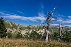 Montchanais (bewo22) Tags: montagne mountain jura paysages landscapes arbres trees mort dead gex auvergnerhnealpes france fr montchanais