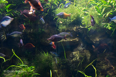 FujiXE2-0141 (QTTheory) Tags: cvg cincinnati ohio newport aquarium newportaquarium fujifilm fujinon xe2 xf 1855mmf284rlmois
