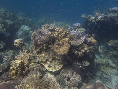 DJIBOUTI (58 of 88) (GregoireDubois) Tags: djibouti nature sea diving wildlife corals