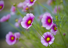 Flowers of Summer! (WilliamND4) Tags: flowers summer nikon d610 pink bokeh dof