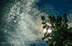Sundog Pine (Goose Spittin' Image Photography) Tags: summerland sky sundog clouds rainbows