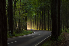 Allee ins Licht (webpinsel) Tags: bäume allee strase morgendämmerung münsterland sonnenaufgang sommer landschaft natur halternamsee