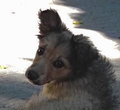 Tierna mirada. (jagar41_ Juan Antonio) Tags: perros perro animales animal mascotas mascota