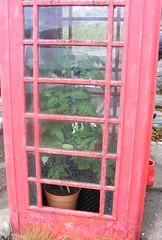 Bush telegraph (leedslily) Tags: ulva island mull scotland telephone box kiosk red glass window pane plant green pot