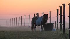 Misty morning - HFF!
