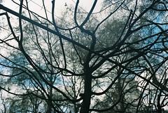 0086_01 (www.cjo.info) Tags: park england sky cloud plant tree london film 35mm garden flora kodak unitedkingdom rangefinder bloomsbury sillouette analogue yashica russellsquare geolocation kodakportra160 yashicalynx14 compactrangefinder geocity exif:make=fujiphotofilmcoltd geocountry camera:make=fujiphotofilmcoltd geostate camera:model=sp3000 exif:model=sp3000