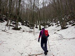 """Ascending through snow-laden forest • <a style=""""font-size:0.8em;"""" href=""""http://www.flickr.com/photos/41849531@N04/17380543942/"""" target=""""_blank"""">View on Flickr</a>"""