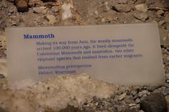 Mammoth - Info (juan_guthrie) Tags: drumheller alberta royaltyrrellmuseum dynosaur