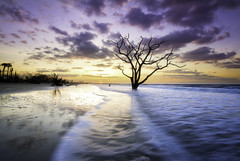 A Lone Tree on the beach. (3dRabbit) Tags: morning sky usa color tree beach sc water ghost wave lonely coulds