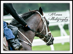 Mubtaahij (EASY GOER) Tags: horses horse ny newyork sports race training canon track running racing 5d athletes races thoroughbred equine thoroughbreds belmontpark markiii workouts