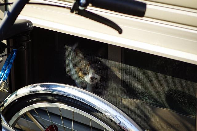 Today's Cat@2015-05-24