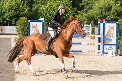 DSC06505_s (AndiP66) Tags: gelb springen balsthal samstag saturday 3juli2016 2016 juli july pferd horse schweiz switzerland kantonsolothurn cantonofsolothurn contest wettbewerb horsejumping springreiten pferdespringen equestrian sports pferdesport sport martinameyer grueb wolhusen luzern sony sonyalpha 77markii 77ii 77m2 a77ii alpha ilca77m2 slta77ii sony70400mm f456 sony70400mmf456gssmii sal70400g2 andreaspeters solothurn ch concours