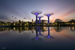 Just Before Sunrise (Martin Yon) Tags: travel gardens by sunrise bay singapore sg martinyon