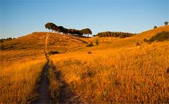 Landscape of Castile-La Mancha / Spain (zilverbat.) Tags: travel trees sunset summer wallpaper sun nature canon landscape gold lights spain outdoor natuur visit hills bookcover goldenhour spanje lamancha tripadvisor zilverbat