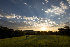Horses grazing at sunset (Keartona) Tags: horses field sunset sunbeams spectacular sky summer clouds sunlight english countryside rural landscape derbyshire