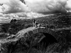 Mollie on the Moors (Missy Jussy) Tags: bridge england sky bw dog monochrome grass clouds canon landscape mono blackwhite stream lancashire pylon hills mollie land moors spaniel springerspaniel dogwalk englishspringer moodylandscape canonpowershotsx60 littledoglaughednoiret