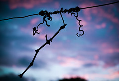 Twist (Vlad S. Ionita) Tags: old blue shadow summer sky abstract detail art nature look lines weather silhouette outside colorful artist skies shadows purple natural web faith dry twist tint minimal line simple twisted twisting