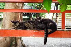 Today's Cat@2016-07-11 (masatsu) Tags: cat pentax catspotting mx1 thebiggestgroupwithonlycats