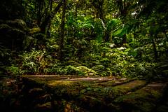 Costa_Rica-006 (s4rgon) Tags: bäume cloudforest costarica lareservabosquenubososantaelena monteverde nationalpark trees wald guanacaste cr