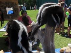 Skunk skin hats (yooperann) Tags: festival rural strawberry different michigan july fair upper unusual quaint peninsula chassell