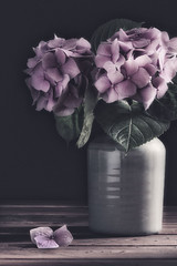 Pink Hydrangeas (RoCafe) Tags: pink flowers stilllife hydrangeas nikond600 nikkormicro105f28