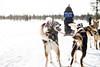 Inari (fernando garcía redondo) Tags: finland inari artic finlandia trineo ártico