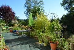 DSC_0969-1 (Chaumurky) Tags: h garden