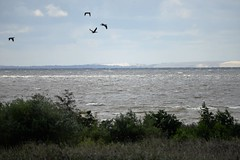 DSC_0399 (sauliusjulius) Tags: rusns sala nemuno delta the neman river landkreis heydekrug memelland