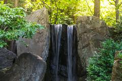 DSC_0646 (Azezra) Tags: scenery nature manito park spokane washington bokeh bridge water waterfall rocks creek nikon nikond3300 d3300 pond engage engagement engaged love lovers macro ring diamond diamonds surprise loving scenic