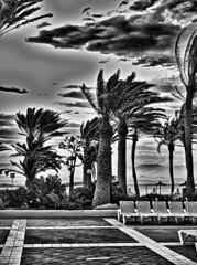 Riu Oliva pool area (EdgarJa) Tags: espania canarias fuerteventura spanien kanaren spain palmen palmas sunbeds