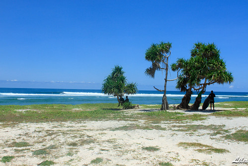Rote Island Boa