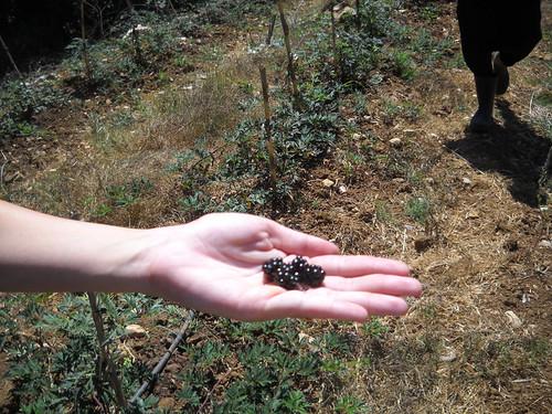 Nabeh Elsafa  Visit Inspect plants d Sep, 2014