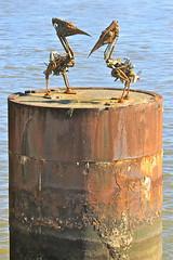 Rusty birds (adamsgc1) Tags: sculpture birds river rust brisbane pontoon metalbirds