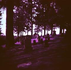 (liquidnight) Tags: autumn film broken cemetery graveyard angel oregon analog mediumformat portland wings lomo lomography purple toycamera surreal statues headstones angels mementomori pdx dreamy analogue tombstones vignetting dreamscape filmphotography pouva mtcalvarycemetery pouvastart mountcalvarycemetery lomochrome lomochromepurple lomochromepurplexr100400
