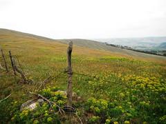 Divčibare 093 (jecadim) Tags: flowers wild mountain trekking spring hiking meadow divčibare
