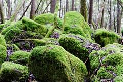 20160712-04-Mossy boulders in Wellington Park (Roger T Wong) Tags: 2016 austraia cathedralrock rogertwong sel2470z sony2470 sonya7ii sonyalpha7ii sonyfe2470mmf4zaosscarlzeissvariotessart sonyilce7m2 tasmania wellingtonpark bushwalk green hike moss outdoors rocks tramp trek walk