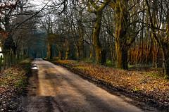 Acrise in Winter (Cockedhat1) Tags: acrise sunset lowsun greens baretrees stillness sunshinehighlights browns winter