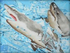 Paddle Board Detail (Chris C. Crowley) Tags: paddleboarddesign sharks shark fish water artwork notmyartwork paddleboard splash