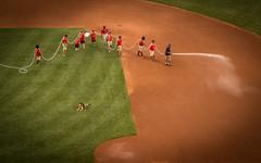 Service dog in training (hickamorehackamore) Tags: 2016 august boston dog fenway fenwaypark germanshepherd ma massachusetts redsox redsoxvsyankees yankees baseball servicedog servicedogintraining summer