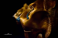 Lions (max.fontanelli) Tags: king treasure tomb egypt re tesoro tomba egitto oro tutankhamun pharaon golg faraone