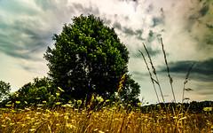 Hard Contrasts (david_sharo) Tags: davidsharo landscape wideangle trees fields clouds sky polarizer