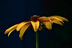 The Flower (nebulous 1) Tags: flower nature contrast flora nikon pov nebulous1