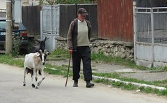 Govedartsi, Bulgaria (Elisa1880) Tags: govedartsi bulgaria bulgarije rila mountains geit goat man