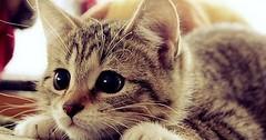 Hunter Cat!1 via http://ift.tt/29KELz0 (dozhub) Tags: cat kitty kitten cute funny aww adorable cats
